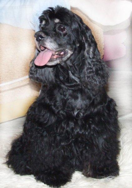 Betty z Bocanky, 30.12.2006